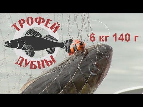 Трофей Дубны. Видеоотчет. Как поймать самого крупного судака и победить?