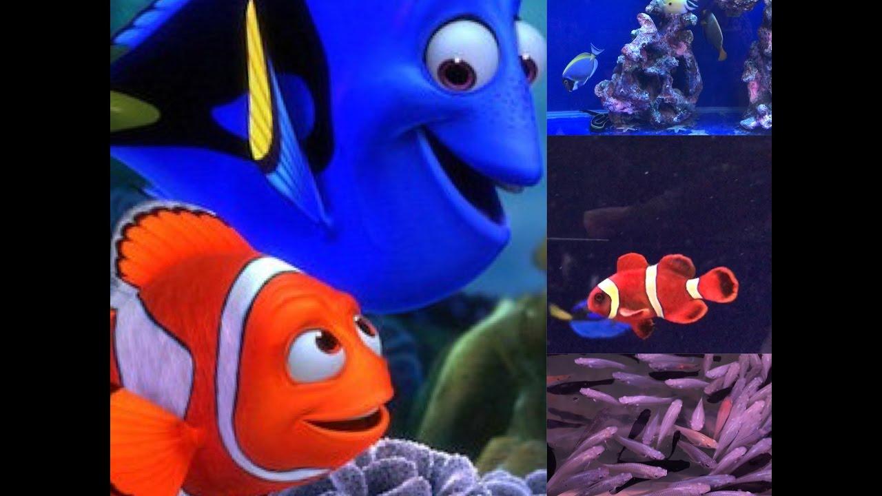 Cool fish fish aquarium kurla east youtube for Cool pet fish