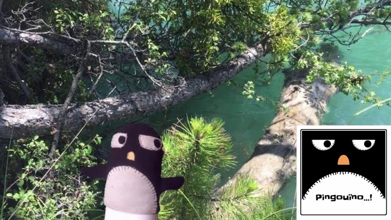 LE LAC... Pingouïno...! REPORTAGE N°16