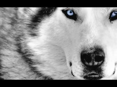 Son of a Wolf - Powerwolf