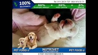 Funny dogs & NUTRIVET zdrava hrana za pse i mačke (4)
