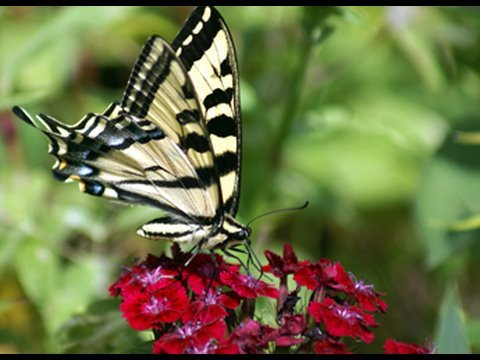 flower garden - butterfly garden - youtube, Gartenarbeit ideen