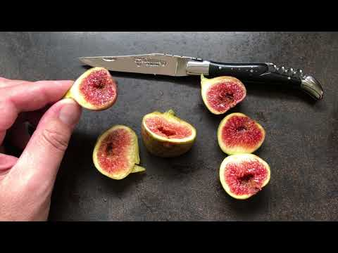 french fig farm: Coll de Dama Blanca Negra