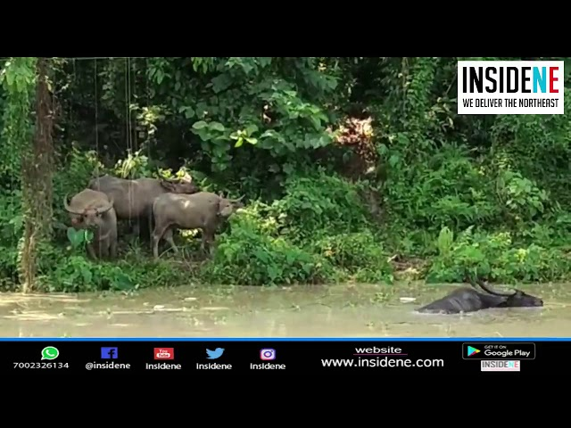 Assam: 70% Of Kaziranga National Park Submerged Under Water