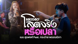 โสดจริงหรือเปล่า - เนม สุรพงศ์ Feat. กระต่าย พรรณนิภา 【Live Version】