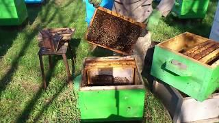 видео Пчелы весной