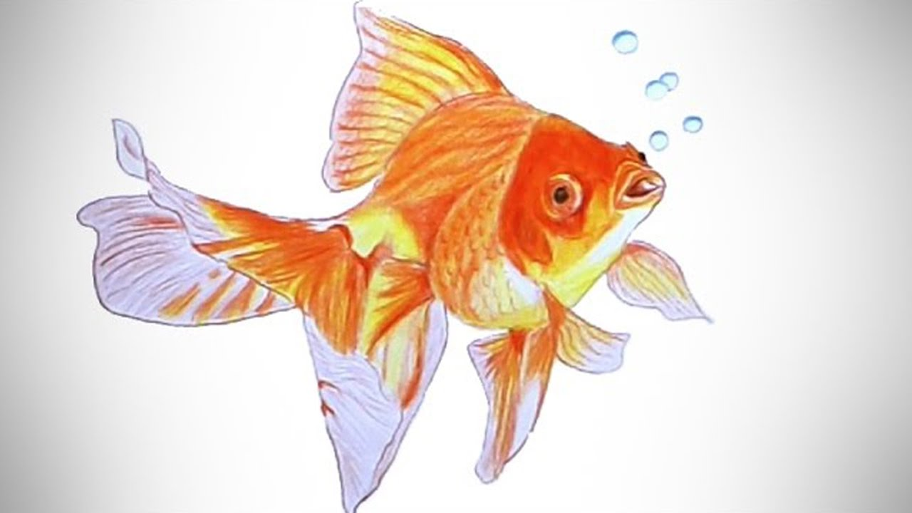 how to draw a goldfish speed drawing