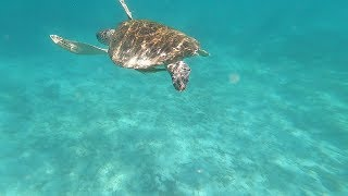 Masasa Beach, Tingloy, Pt 4 Swimming with Sea Turtles.