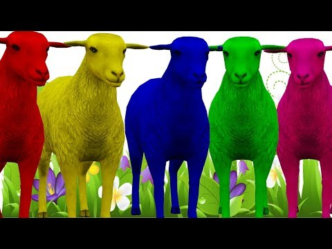 Learn Sheep Colorful Color Song For Kids || Nursery Rhymes Collection For Children thumbnail