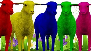 Learn Sheep Colorful Color Song For Kids || Nursery Rhymes Collection For Children