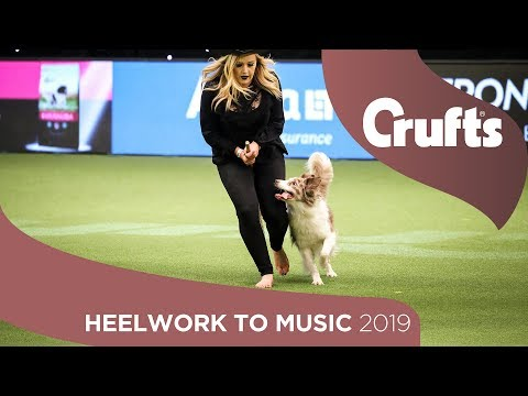Heelwork To Music Competition Part 2 | Crufts 2019