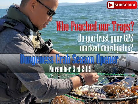 Dungeness Crab Opener 2019 Did We Get Poached? You Decide 11/3/2019