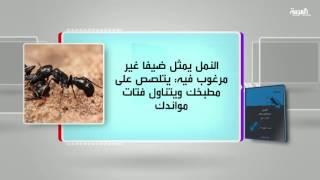 كل يوم كتاب: النمل .. التاريخ الطبيعي والثقافي