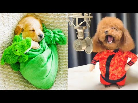 Baby Dogs - Cute and Funny Dog Videos Compilation #14 | Aww Animals