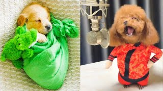 Baby Dogs - Cute and Funny Dog Videos Compilation #14   Aww Animals