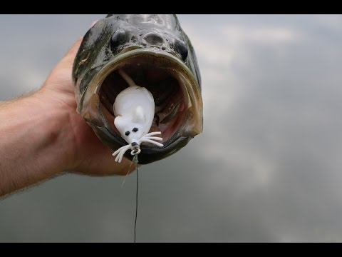 Thumbnail: Fishing With A Mouse?!?!