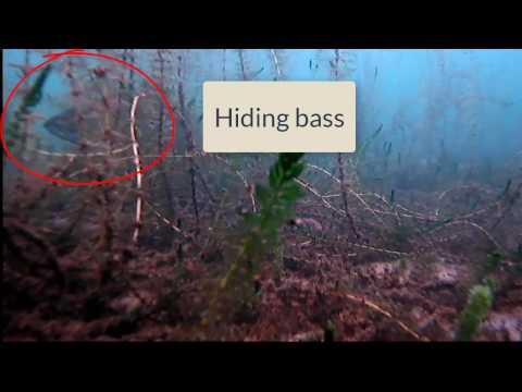 Understanding The Lake Bottom With Sonar And Aqua-Vu