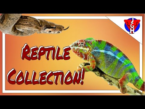 Reptile Collection March 2017!!!