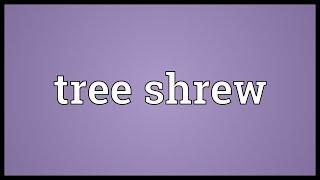 Tree Shrew Meaning