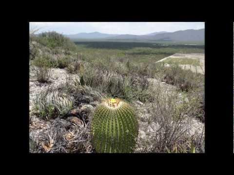 Video slide San Luis Potosi Mexico