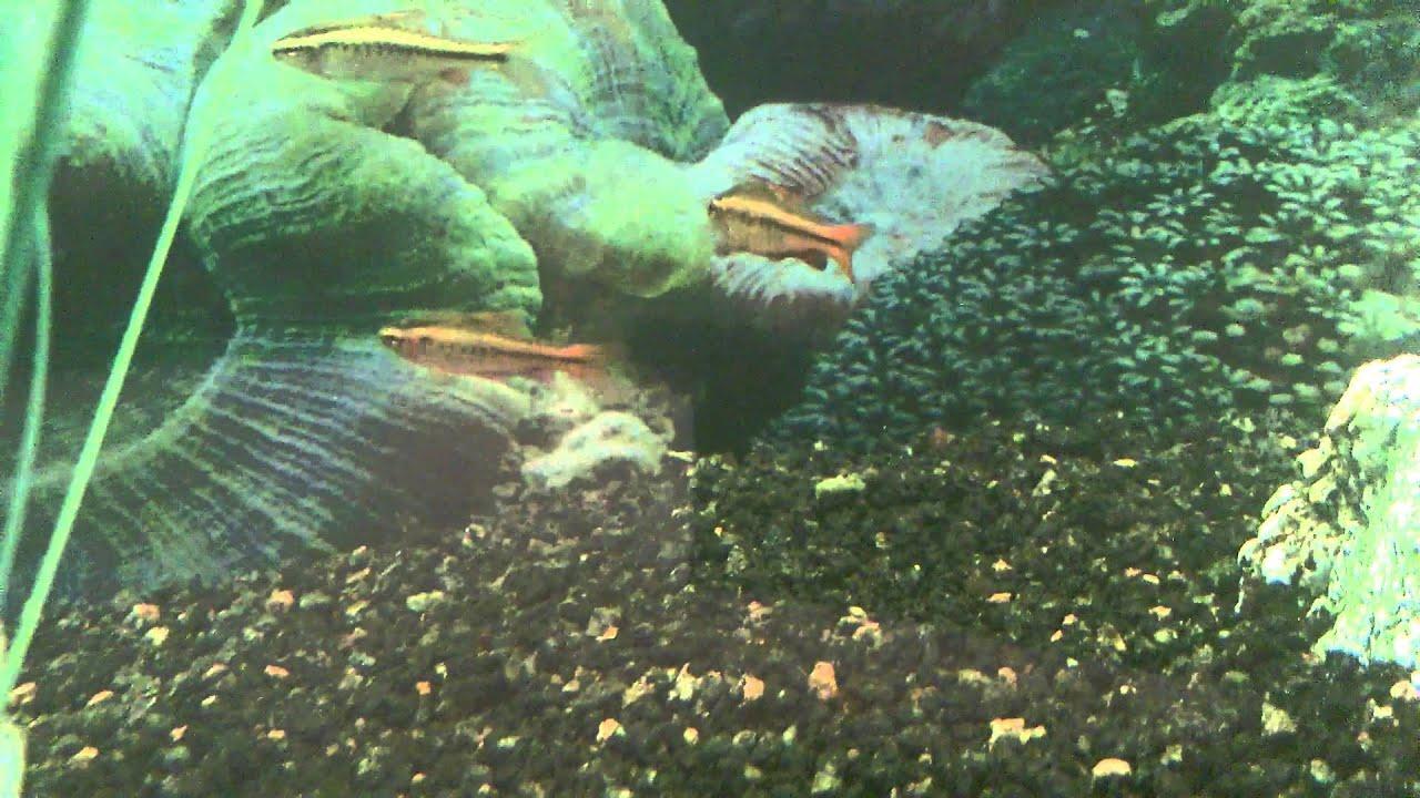 FloraMax Planted Aquarium Substrate reveiw - YouTube