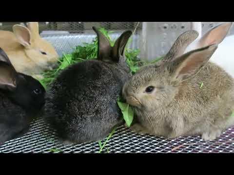 DÂY TÂY ,5 chú thỏ con dễ thương nhất năm của Vinh Nguyen Thi