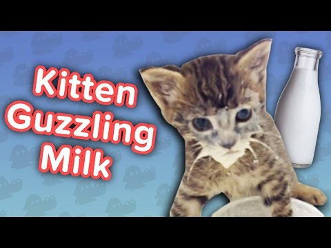 Kitten Guzzles Milk & Delinquent Crows! // Funny Animal Compilation