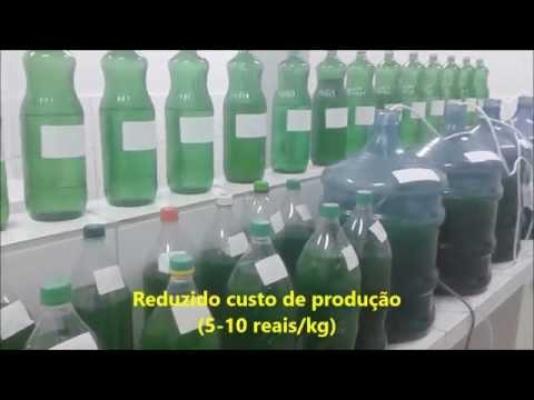 CULTIVE SPIRULINA EM CASA- CULTIVO CASEIRO DE ESPIRULINA