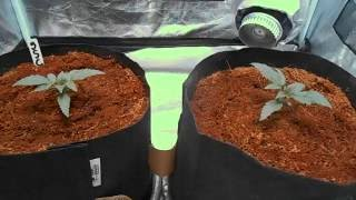 db003 s girl scout cookies auto fast buds comp coco mars ii 700 video update 2