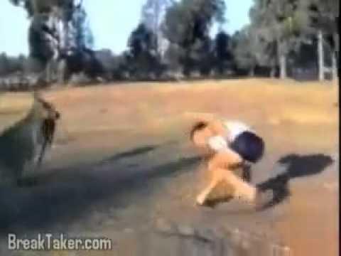Tai nạn vui về Động vật