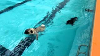 Woofのプールで遊びました♪(*≧∀≦*)