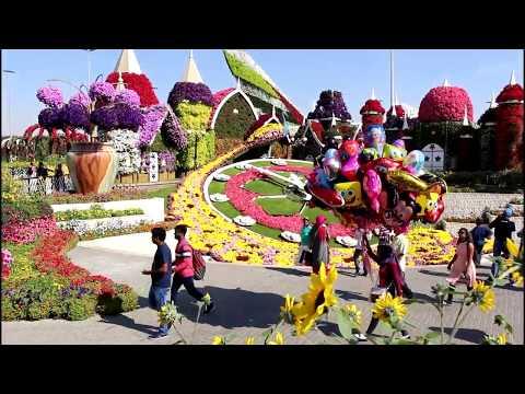 Парк цветов в Дубае Миракл Гарден  Dubai Miracle Garden