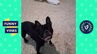Funny Animals Videos Compilation 2018   Best Pet Videos   Funny New Vines V2 2