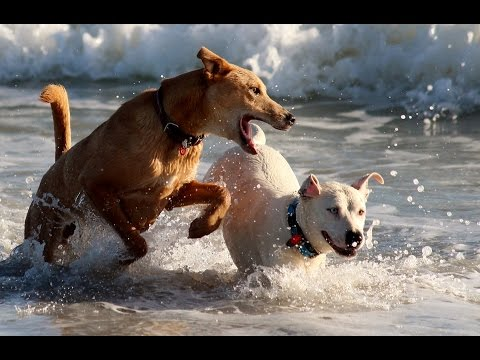 Top 10 Most Playful Dogs In The World