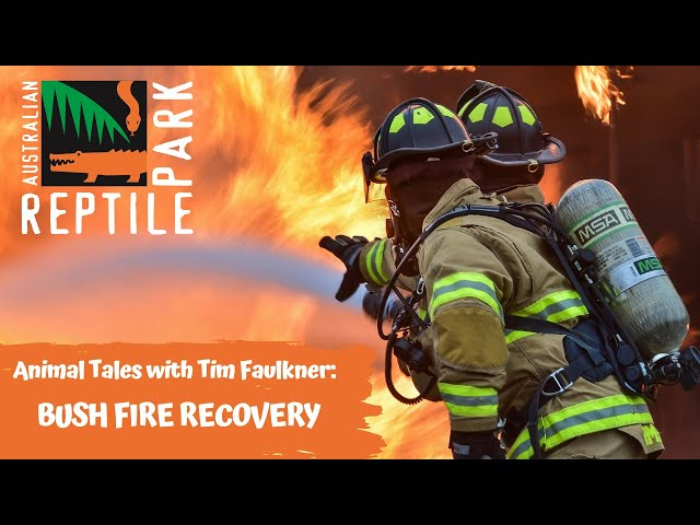 ANIMAL TALES WITH TIM FAULKNER | EPISODE 37 | BUSHFIRE RECOVERY