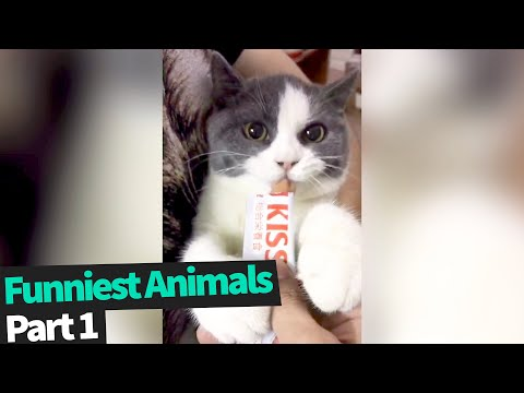 Ultimate Funny Animals Compilation | Funniest Animals Videos 2019 (Part 1)