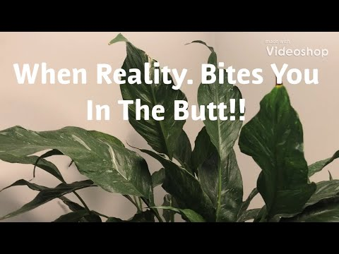 Plant Tour. REALITY --- Bedroom and Office