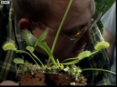 B013 Plants and MRSNERG
