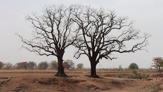 Climate change   The importance of the Paris Accord for Africa