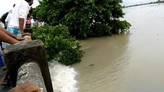 North Bengal flood August 2017