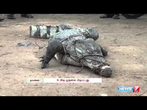 Forest officials catch Crocodile at Namakkal | Tamil Nadu | News7 Tamil