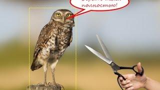 Как вырезать или обрезать фото (картинку) онлайн