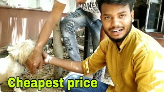 wholesale market cheap price in India || pitbull dog