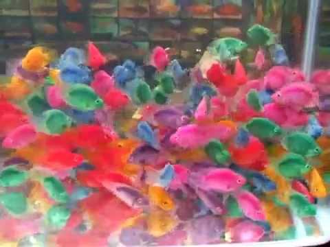 my parrot fish tank