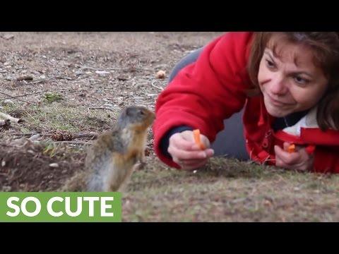 Gopher kisses woman for tasty carrot