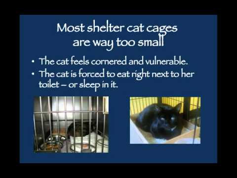 Stress Reduction for Shelter Cats