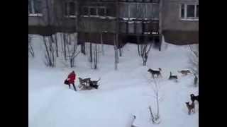Стая диких собак нападают на молодую женщину в парке.