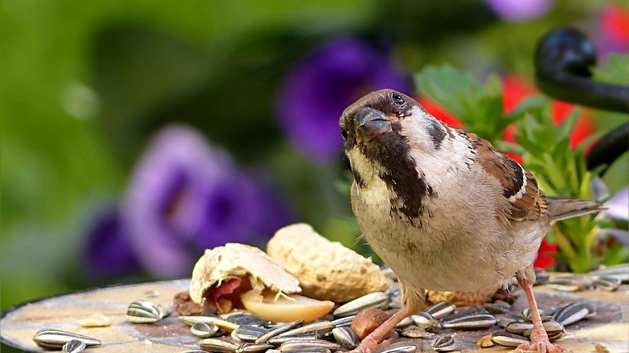 Funny Bird Videos, Sparrow Birds