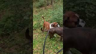 Boxer Rex got a surprise camouflage!