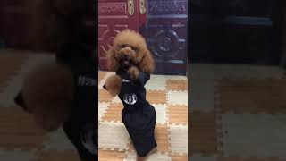 Look at these cute and funny puppies dogs 3176